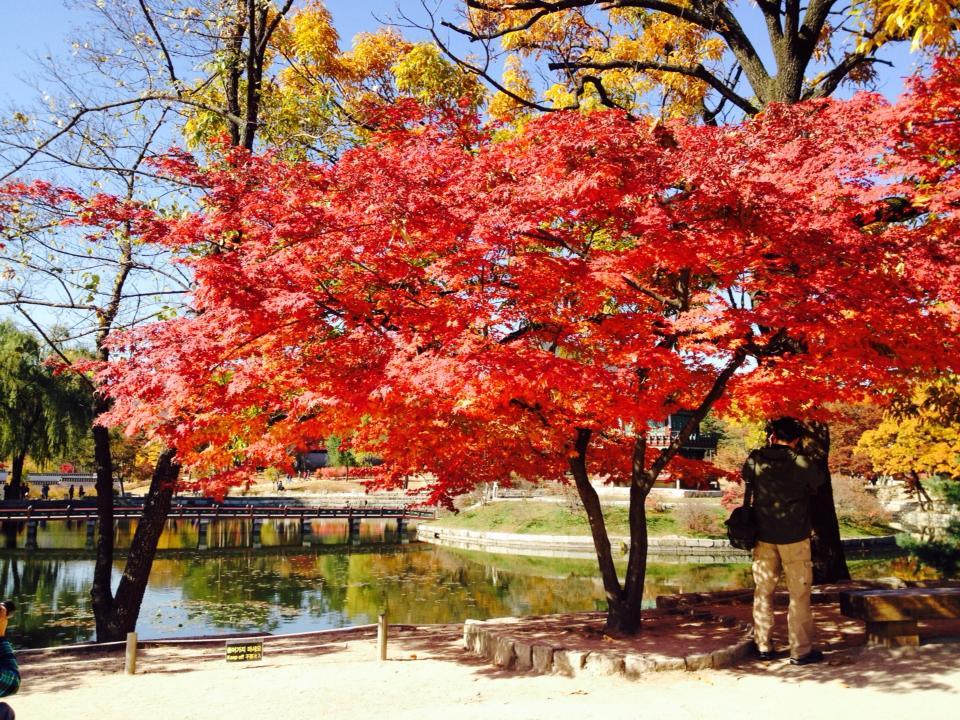 韓国の紅葉